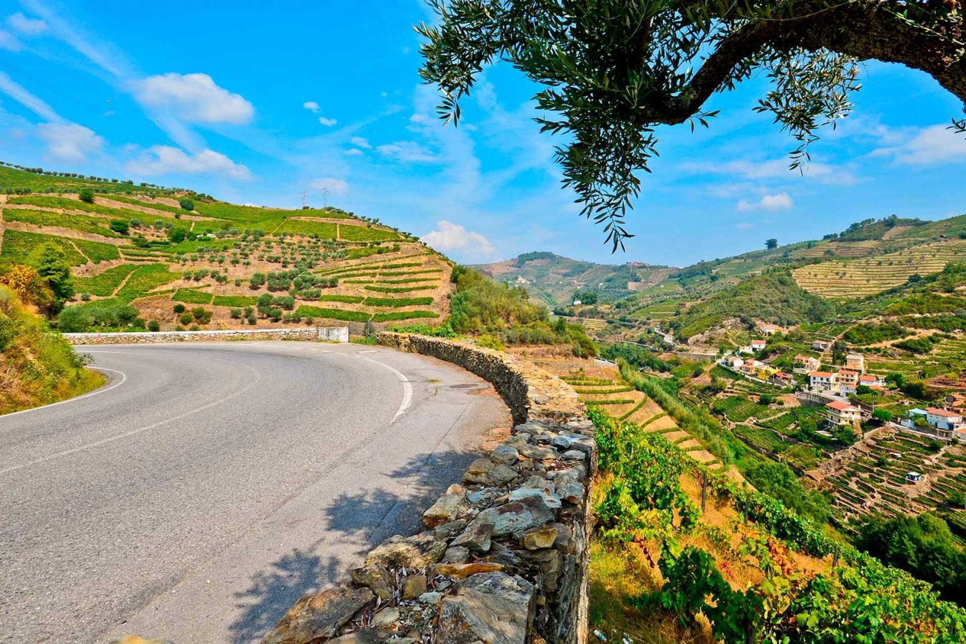 Vale do Douro / Peso da Régua / Shutterstock_Fotobox